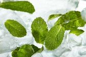 Leaves of mint in ice — Stock Photo