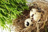 Jaj w gnieździe prawdziwe — Zdjęcie stockowe