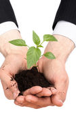 Business men a plant — Stock Photo