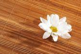 Flowers spa — Stock Photo