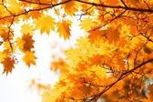 Autumn, yellow leaves — Stockfoto