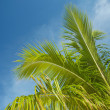 Branch of a palm tree in the blue sky — Stock Photo
