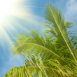 Stock Photo: Branch of a palm tree in the blue sky