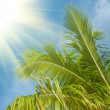 Branch of palm tree in blue sky — стоковое фото #9976484