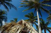 Palmier dans le ciel bleu — Photo