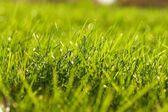 Giovane succosa erba verde — Foto Stock