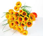 Buquê de tulipas — Foto Stock