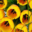 Yellow tulips closeup — Stock Photo #9692087