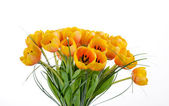 Tulips bouquet — Stock Photo