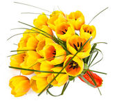желтые тюльпаны крупным планом — Стоковое фото