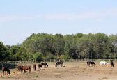 Escena de la granja de caballos — Foto de Stock