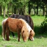 Pony horses in pasture — Stock Photo