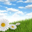 Nature background - daisies in the meadow and blue sky — Stockfoto