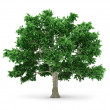 Royalty-Free Stock Photo: Tree isolated on white background