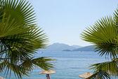 Sea and palm tree — Stock Photo