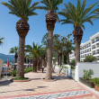 Stock Photo: Palms in Marmaris