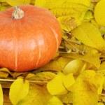 Orang Pumpkin — Stock Photo