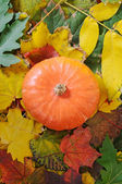 Orange Pumpkin — Stock Photo