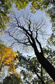 Tree in the autumn — Stock fotografie
