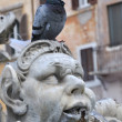 Pigeon at fountain — Stockfoto