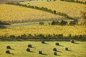 Oyster Bay Vineyards — Stock Photo
