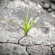 Green plant growing from cracked earth. New life. — Stock Photo #8730955