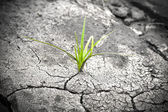 Green plant growing from cracked earth. New life. — Stock Photo