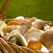 Boletes in the basket — Stock Photo