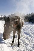 Caballo en la gama de invierno. — Foto de Stock
