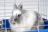 White angora bunny — Stock Photo