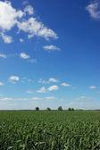 Fältet och sky — Stockfoto