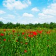 Flowering field beneath the blue sky — Foto Stock
