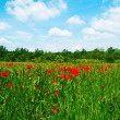 Flowering field beneath the blue sky — Photo