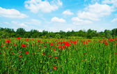 Flowering field beneath the blue sky — Stock Photo