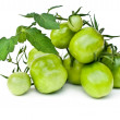 Branch of green tomatoes — Stock Photo