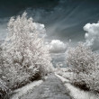 Infrared photo. Road — Stock Photo #8007343