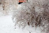 Po zimě déšť — Stock fotografie