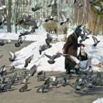Feeding of pigeons — Stock Photo