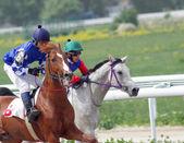 馬のレース. — ストック写真