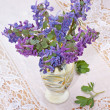 Corydalis, flowers in a vase on a white lace tablecloth — Stock Photo