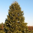 Stock Photo: cristmas tree