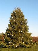 Cristmas tree — Stock Photo