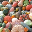 Pumpkins and gourds — Stock Photo #10730093