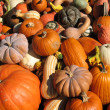 Pumpkins and gourds — Stock Photo #10730109