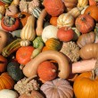 Pumpkins and gourds — Stock Photo #9863931