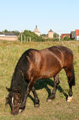Horse in Suzdal Russia — Stock Photo