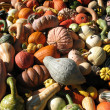 Pumpkins and gourds — Stock Photo #9989587