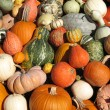 Pumpkins and gourds — Stock Photo #9989599