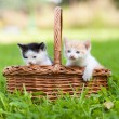 Two little cats in basket outdoors — Stock Photo #8593282