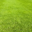Cutted green grass field in sunny day useful as background — Stock Photo #8598859